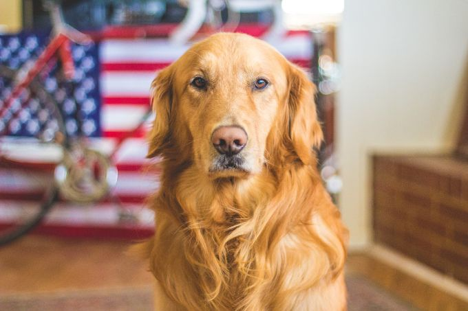 Avoid Looking into the Dog's Eyes for Longer