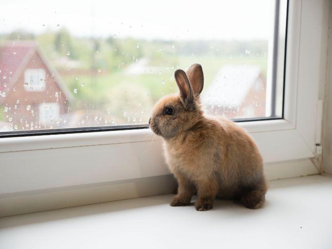 Limit Bunny Territory