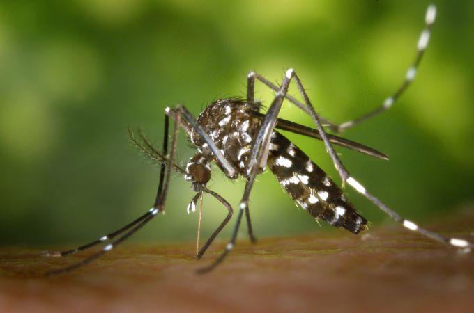 Build a home-made mosquito trap
