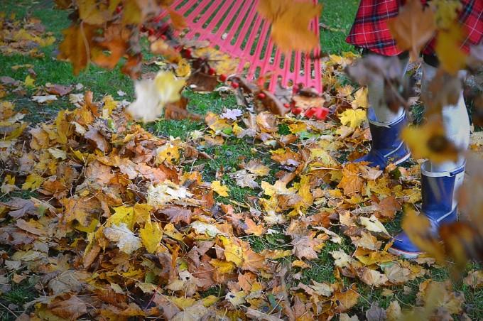 Using Leaf Rake