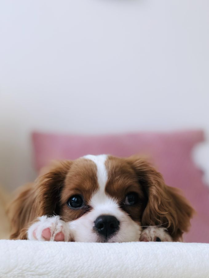 Help the Puppy Get Over Fear