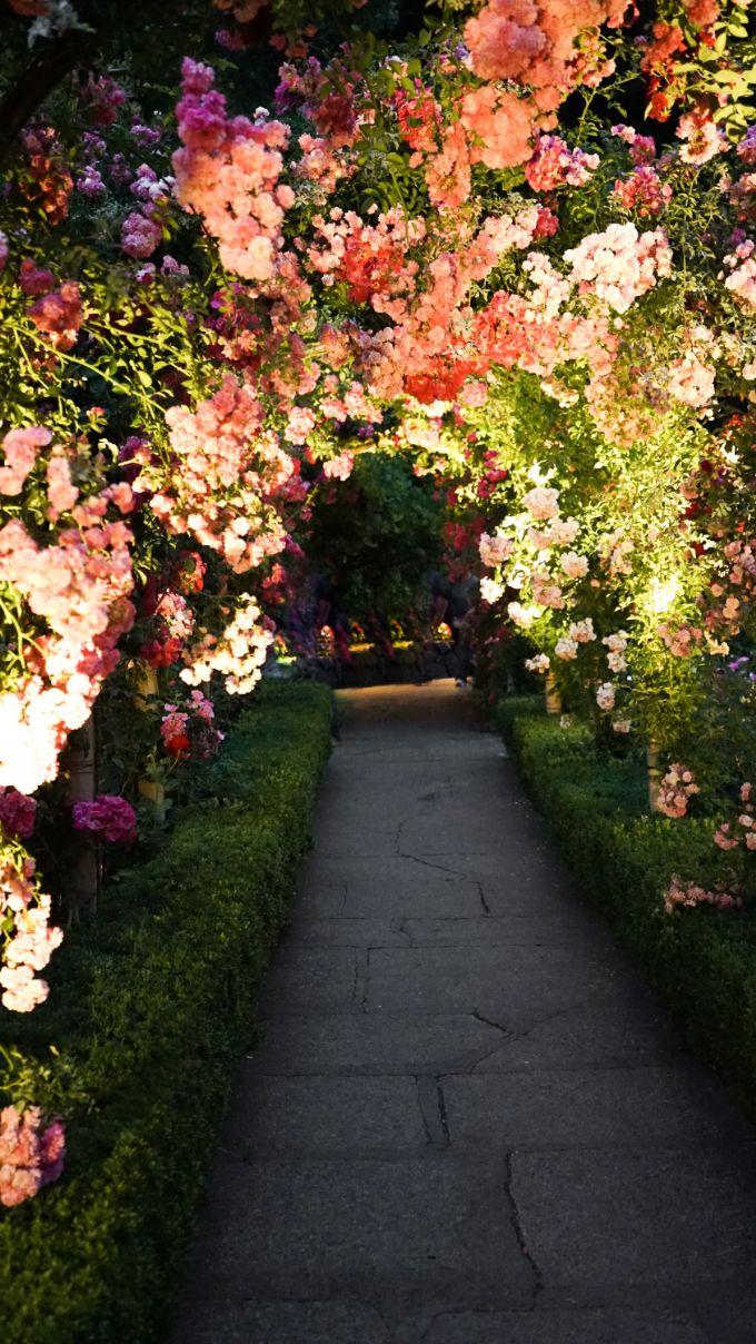 Propose in a Flower Garden