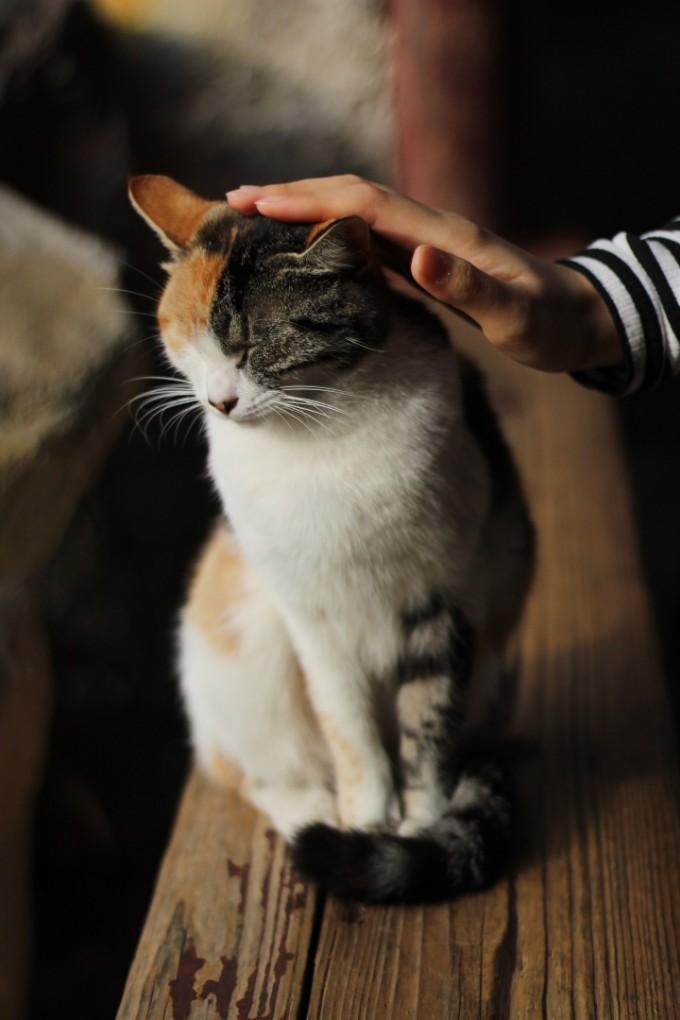 Where Should You Pet a Cat