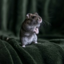 image for topic 'Capture mice'