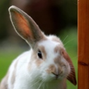 image for topic 'Clean rabbit hutch'