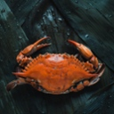 image for topic 'Cook dungeness crab'