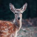 image for topic 'Hunt deer'