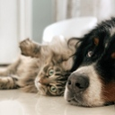 image for topic 'Introduce cats to dogs'