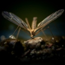 image for topic 'Keep bugs away at night'