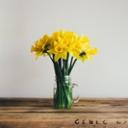 image for topic 'Keep daffodils fresh'