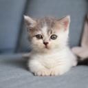 image for topic 'Litter box train a kitten'