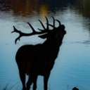 image for topic 'Lure deer'