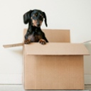 image for topic 'Pack for moving'