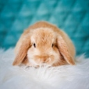 image for topic 'Pet a bunny'