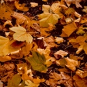 image for topic 'Pick up leaves'