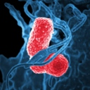 image for topic 'Recuperate from pneumonia'